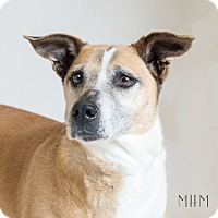 Adopt A Pet :: Helen - Naperville, IL