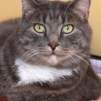 Adopt A Pet :: Nautilus - St. Paul, MN