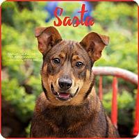 Adopt A Pet :: Sasta - Cincinnati, OH