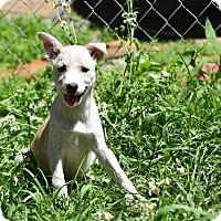 Adopt A Pet :: skye - Groton, MA