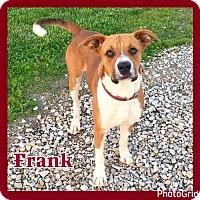 Adopt A Pet :: Frank - Jasper, IN