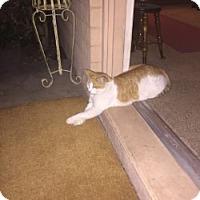 Adopt A Pet :: LEO - Mesa, AZ