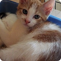 Adopt A Pet :: Ginger - Grants Pass, OR