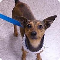 Adopt A Pet :: Monkey - Sugar Land, TX