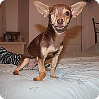 Adopt A Pet :: Cody - Fort Collins, CO