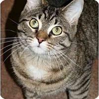 Adopt A Pet :: Mai Tai - Racine, WI