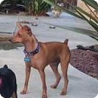 Adopt A Pet :: Captain - Oceanside, CA
