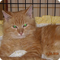Adopt A Pet :: Matthew - Riverside, RI