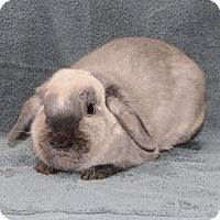 Adopt A Pet :: Patience - Fountain Valley, CA