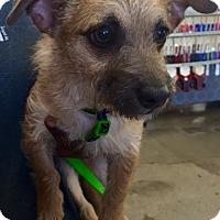 Adopt A Pet :: Henry - Cerritos, CA