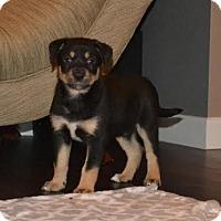 Adopt A Pet :: Negan - Saskatoon, SK