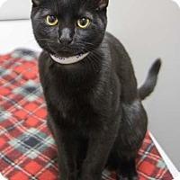Adopt A Pet :: Jovi - Merrifield, VA