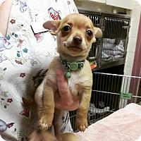 Adopt A Pet :: Bubbles - Elmira, CA