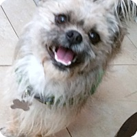 Adopt A Pet :: Mr. Wilbur - Phoenix, AZ