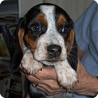 Adopt A Pet :: Ella - Westfield, NY