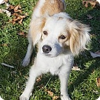 Adopt A Pet :: Karing Karen - Brooklyn, NY