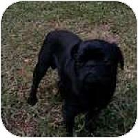 Adopt A Pet :: Skipper - Windermere, FL
