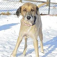 Adopt A Pet :: Lovely Loki - Brooklyn, NY