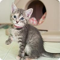Adopt A Pet :: Lillian - Shelton, WA