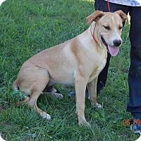 Adopt A Pet :: Bacon(45 lb) New Pics & Video - SUSSEX, NJ