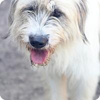 Adopt A Pet :: Bettina - pending - Norwalk, CT