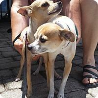 Adopt A Pet :: Cartwright - S. Pasedena, FL