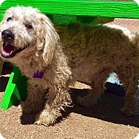 Adopt A Pet :: Mr. Jingles - Portland, OR