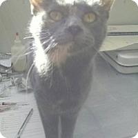 Adopt A Pet :: Shelby - Saginaw, MI