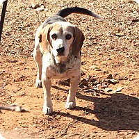 Adopt A Pet :: Petey - Blanchard, OK
