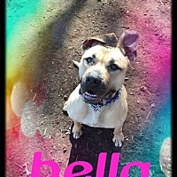 Great Dane Mix Dog for adoption in Brookhaven, New York - Bella