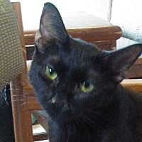 Adopt A Pet :: Deva - Marion, NC