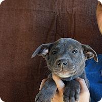 Adopt A Pet :: Sophie - Oviedo, FL