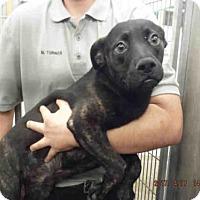 Adopt A Pet :: A572544 - Oroville, CA