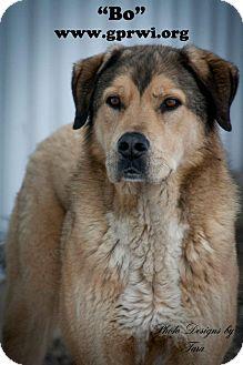 Great Pyrenees/Labrador Retriever Mix Dog for adoption in Cambridge, Illinois - Bo