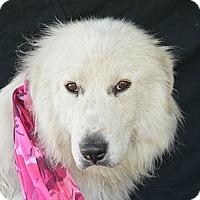 Adopt A Pet :: Brooks - Plano, TX