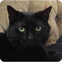 Adopt A Pet :: Midnight - Etobicoke, ON