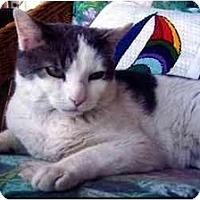 Adopt A Pet :: Curly - Jenkintown, PA