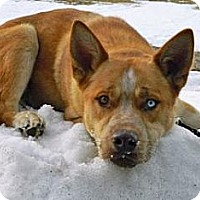 Adopt A Pet :: Scrappy - Cheyenne, WY