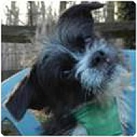 Adopt A Pet :: McGee - Beachwood, OH