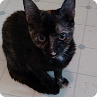Adopt A Pet :: Betsy - Morganton, NC