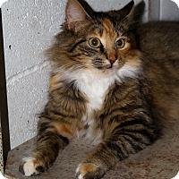 Adopt A Pet :: Goldie - Sylvania, GA