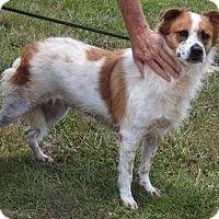 Adopt A Pet :: Kanati - Gainesville, FL