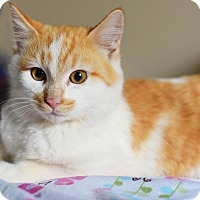 Adopt A Pet :: Toby - Xenia, OH