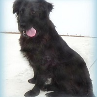 Adopt A Pet :: ALLIE - Holly Springs, MS