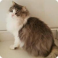 Adopt A Pet :: Manny - Salisbury, NC