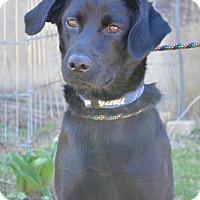 Adopt A Pet :: Jules - Danbury, CT