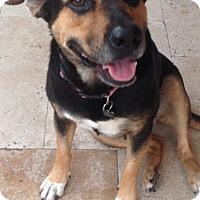 Adopt A Pet :: Gigi - West Palm Beach, FL