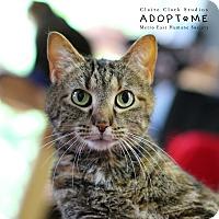 Adopt A Pet :: Squirrel - Edwardsville, IL