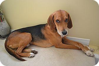 Hovawart/Shepherd (Unknown Type) Mix Dog for adoption in Hamilton, Ontario - Rollo
