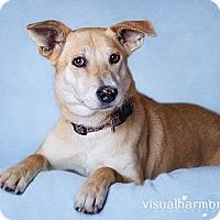 Adopt A Pet :: Gretel - Phoenix, AZ